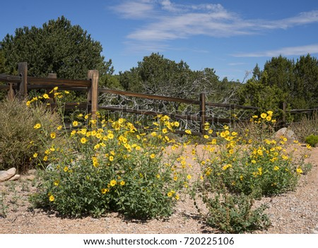 Fall yellow daisy wildflowers along old wooden post fence with pinion, juniper trees and blue sky in background