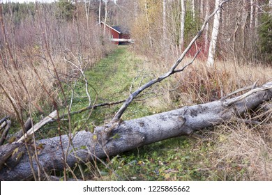 Stock photo of fallen aspen trees across path leading to small red house in Scandinavia, North Europe. Focus on house.