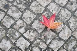 Fallen autumn leaf on the ground
