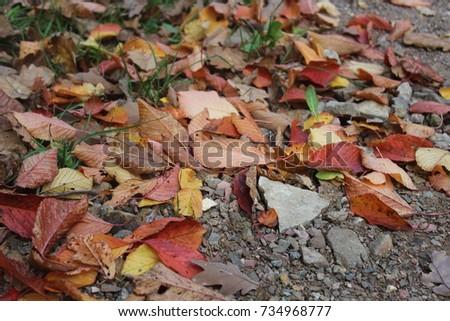 Fallen autumn leaves #734968777