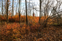 fallen autumn leaves and orange bushes