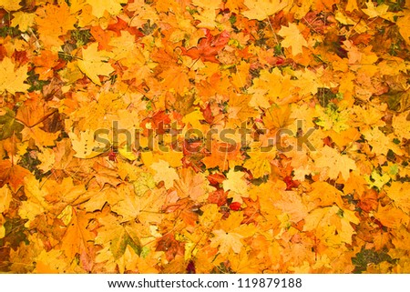 fallen autumn leaves as a background