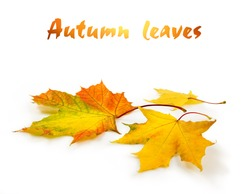 fallen autumn leaves, clipping path included