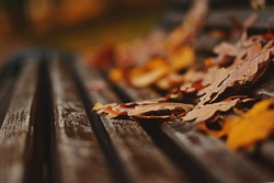 Fallen autumn leaves lie on an old wooden bench in a Moscow park