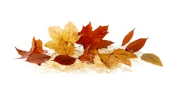 Fallen autumn leaves  on straw isolated on white background. Fall banner