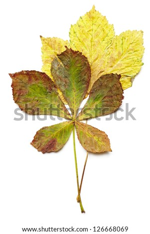 Fallen autumn leaves on white background