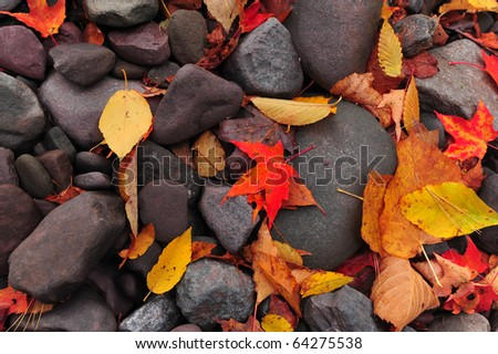 Fallen, colorful autumn leaves laying on rocks by stream bed