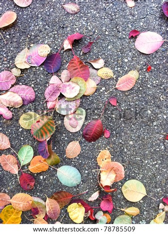 Fallen colorful leaves