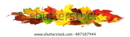Fallen down autumn leaves in vivid colors, studio isolated on white background