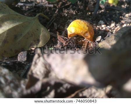 Fallen down fruit #746050843