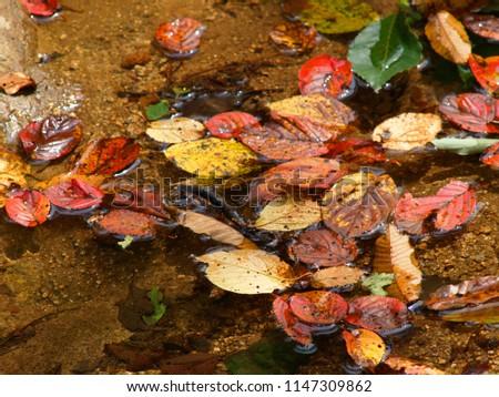 Fallen fallen leaves over mountain valley water #1147309862