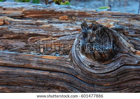Fallen Forest Log #601477886