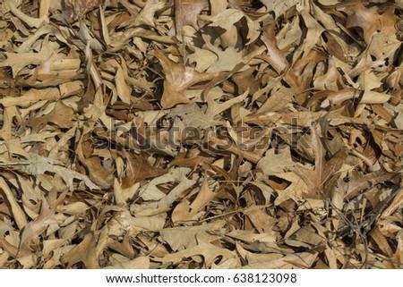 fallen leaves #638123098