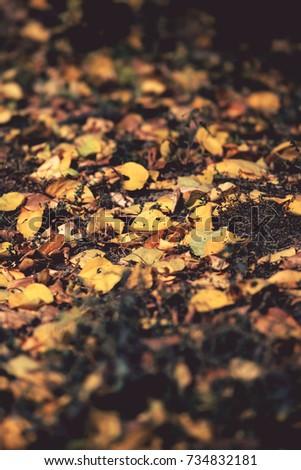 fallen leaves #734832181