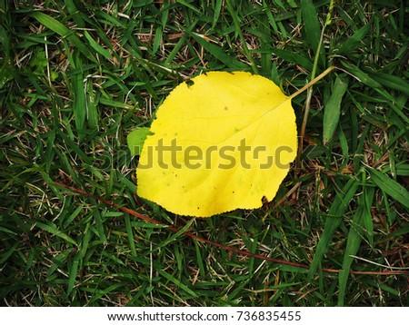 Fallen leaves #736835455