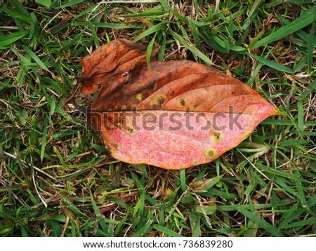 Fallen leaves #736839280