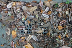 Fallen leaves and drainage ditch.