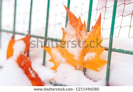 Fallen leaves and fence in the snow #1251446080