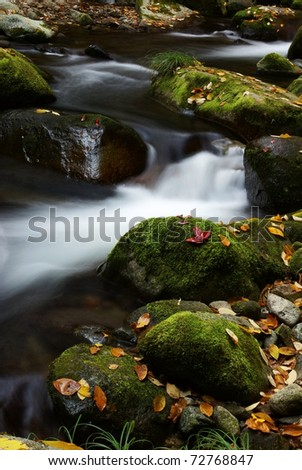 Fallen leaves and stream