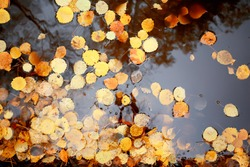 fallen leaves autumn abstract background, yellow leaves, october in the park, seasonal design