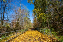 Fallen leaves cover the path of the Putnam Trailway in upstate New York.