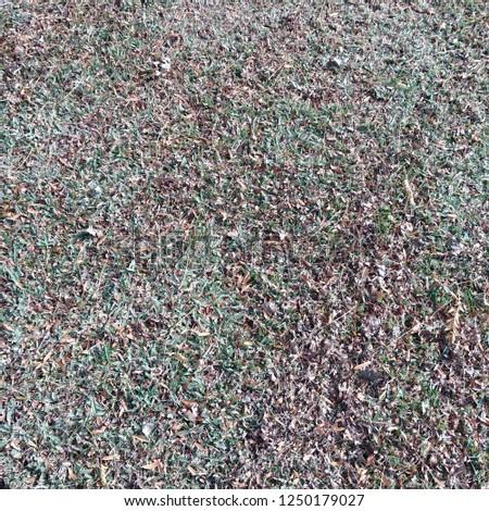 fallen leaves fallen on grass in park #1250179027
