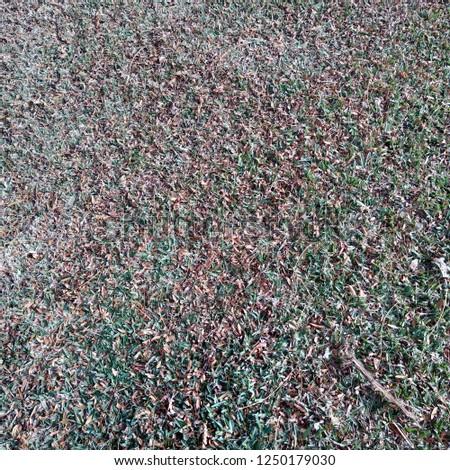 fallen leaves fallen on grass in park #1250179030