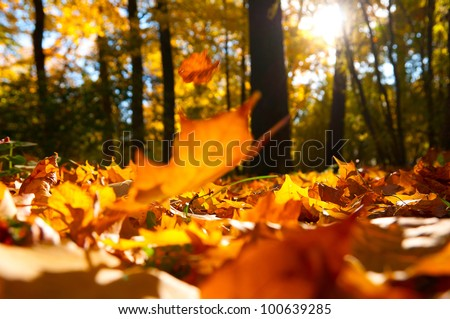 fallen leaves in autumn forest at sunny weather stock photo