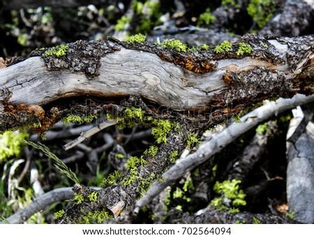 Fallen Log #702564094