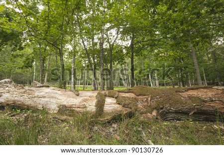 Fallen log, habitat for many woodliving insects, strömsrum, sweden