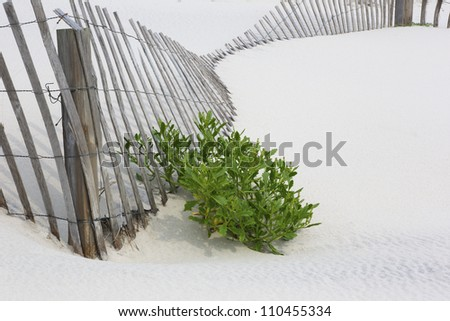 Fallen snow fence on white sand with accent of beach plant.  Location is New Jersey Shore, on dunes of Island Beach State Park, an attraction with trails, swimming, birding, fishing, and hiking.
