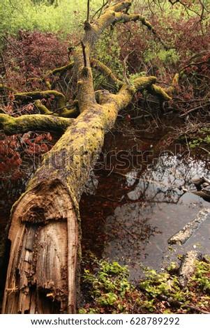 Fallen tree  #628789292