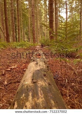 fallen tree #752237002