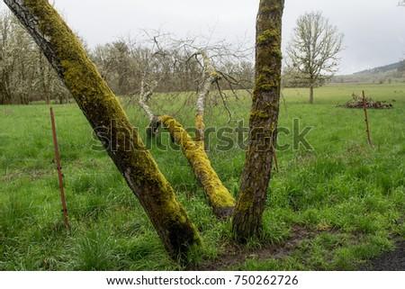 Fallen Tree: A fallen tree is tearing down the fence. #750262726