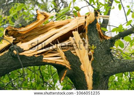 Fallen tree, broken and dangerous, danger #1066051235