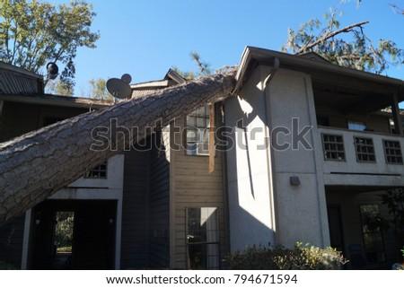 Fallen Tree House Damage  #794671594