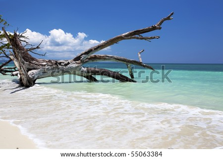 Fallen tree in the blue sea. Havelock, Andaman Islands, India