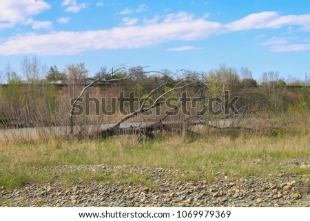 Fallen tree lying in the bank of a lake with its branches partially submerged in the water #1069979369