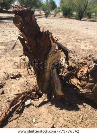 Fallen tree macro #773776342