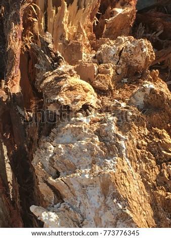 Fallen tree macro #773776345
