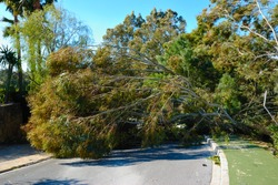 Fallen tree on the road because of strong wind.