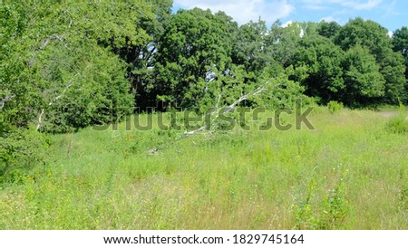 Fallen tree still growing along the Rice Creek Hiking Trail Stock photo ©