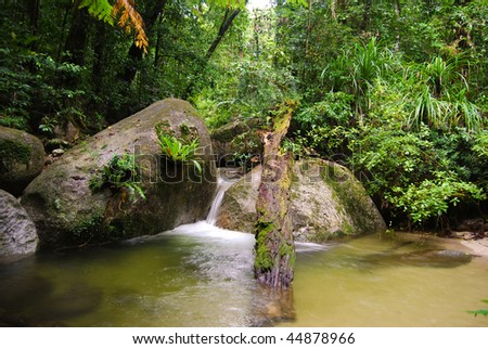 Fallen tree stump in flowing rain forest stream