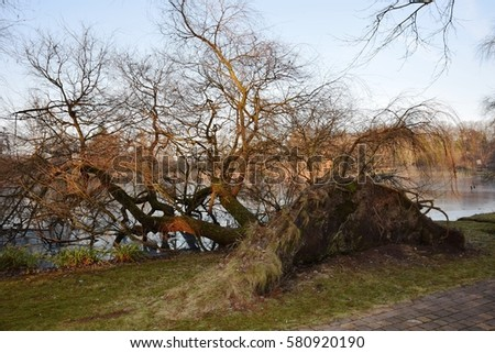 Fallen tree surviving Insider the Lakers with just a Few roots in the ground. Stok fotoğraf ©