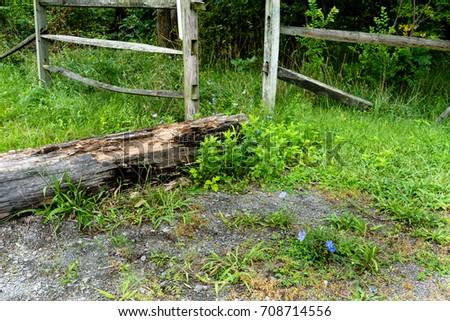 Fallen Tree Trunk #708714556