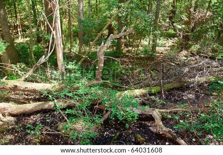 fallen tree trunks in a swamp