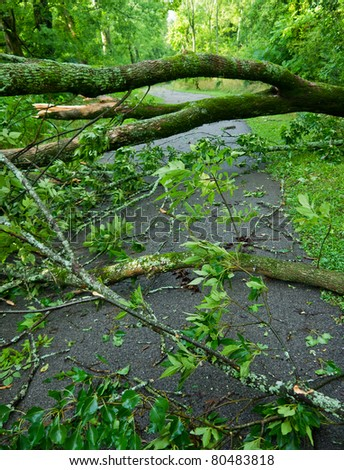 Fallen trees after storm