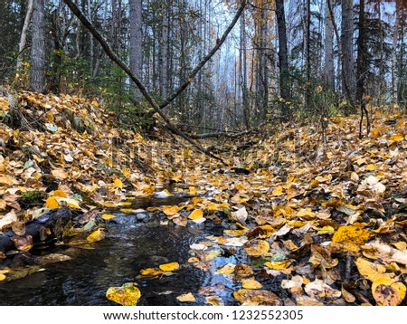 Fallen trees and fallen leaves #1232552305