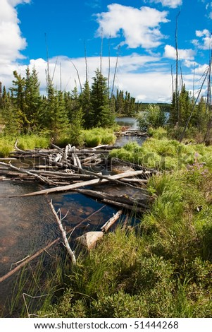 Fallen trees in a Northern Canadian river and natural forest.