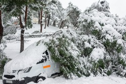 Fallen trees in city center, stormy weather and traffic accident, insurance, weather forecast